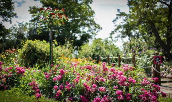 Jardin de Vaulieu - Sallertaine