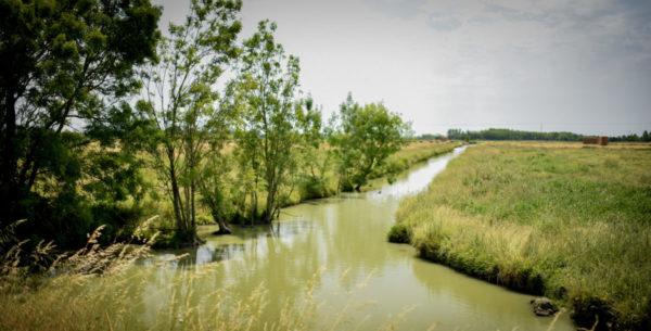 Le marais de Sallertaine
